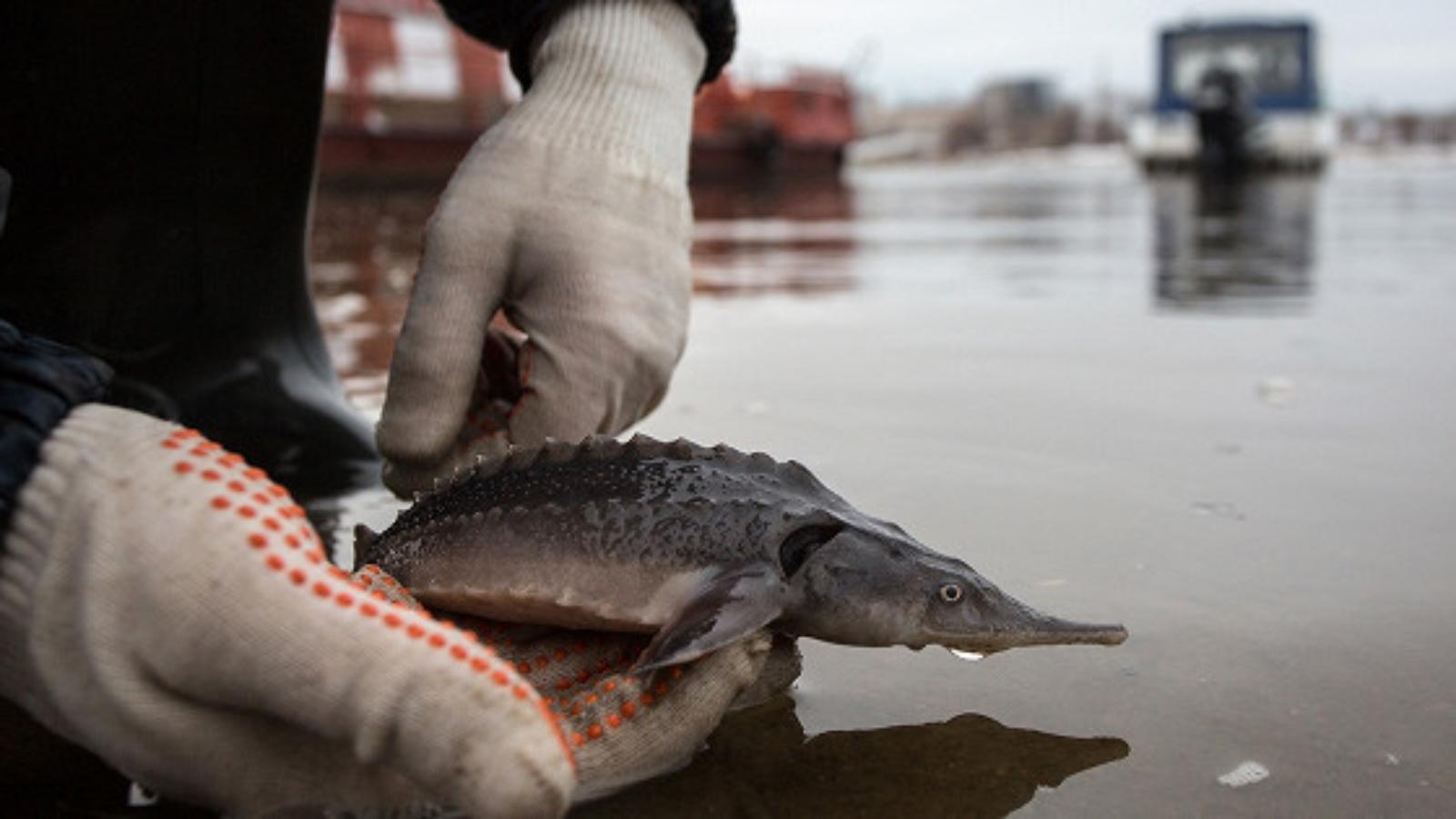согласование-с-рыболовством